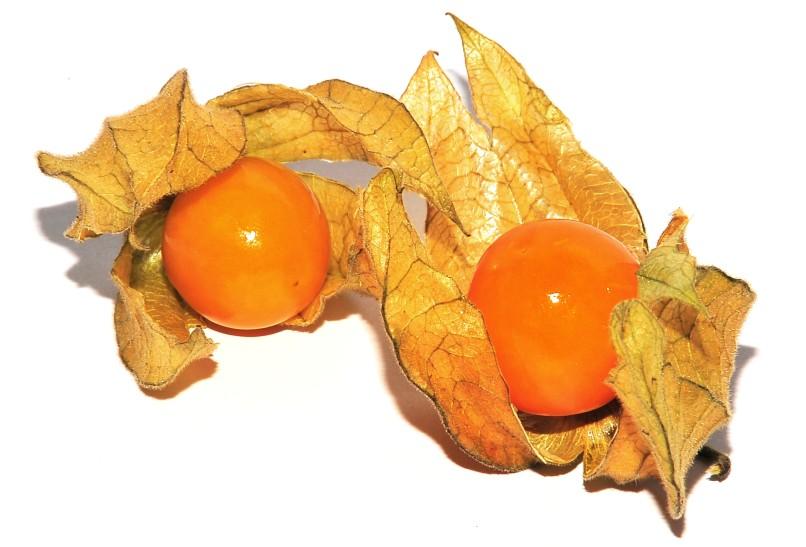 Physalis - smaczny owoc z Kolumbii