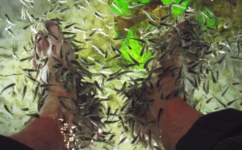 Rybki Garra Rufa - naturalny peeling