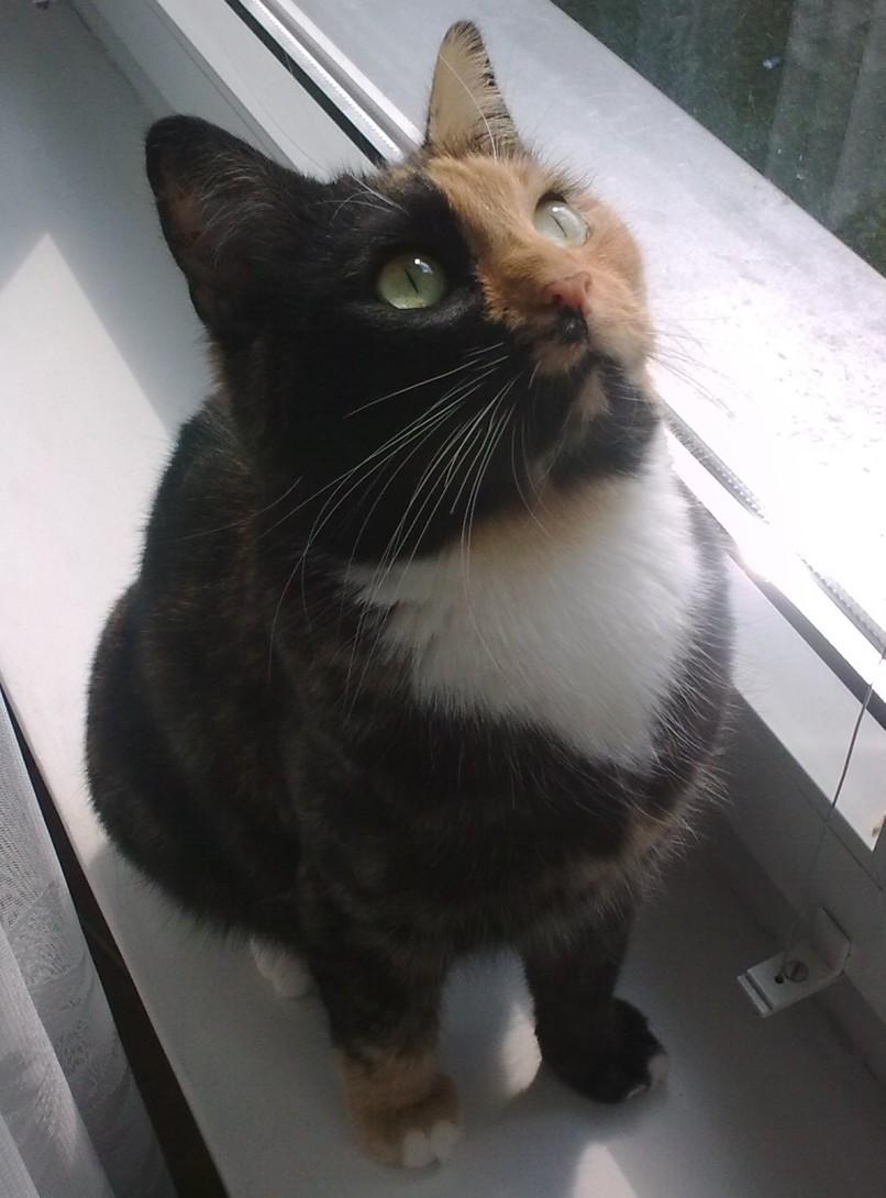 Hipnotyzowanie kota