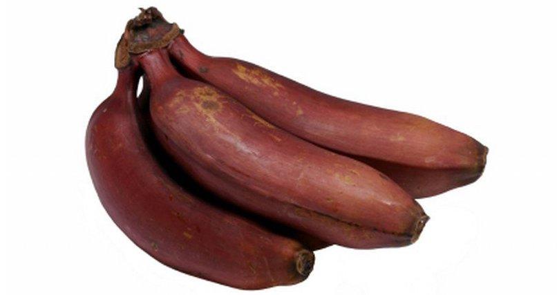 czerwony banan