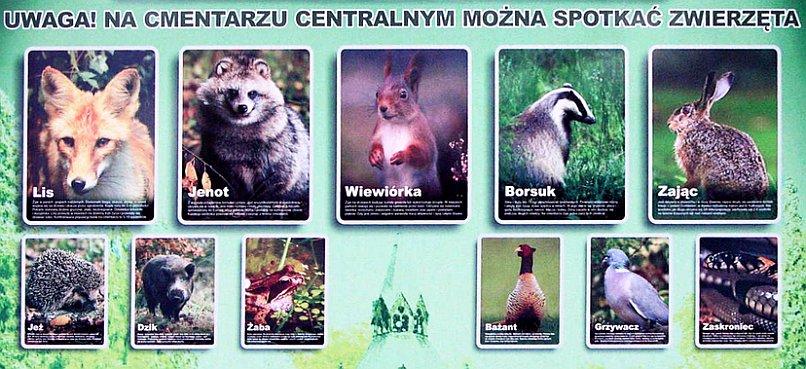 Cmentarz Centralny Szczecin - zwierzęta