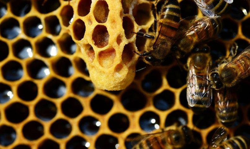 Propolis, pierzga, pyłek kwiatowy - produkty pszczele dla zdrowia