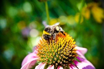 pyłek pszczeli kwiatowy - apiterapia