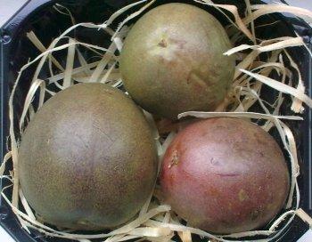 owoce Passion Fruit - marakuja