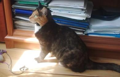 Kotek Zara w gościnie u Deutera