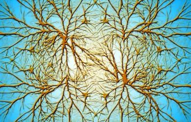 Neurony - płeć mózgu